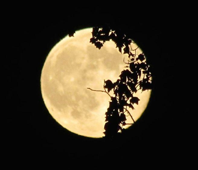 Full moon taken on August 10, 2014